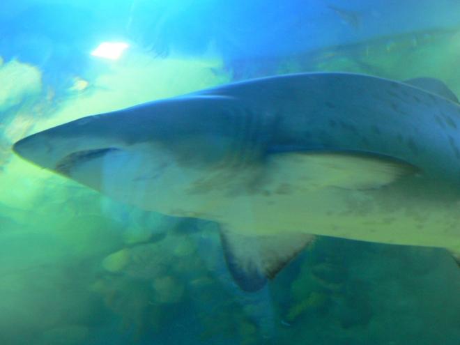 Акули в Истанбул