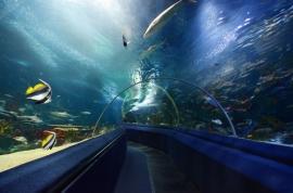 Аквариумът Тюркуазу